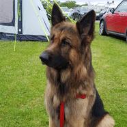 ProDog dog food brands UK