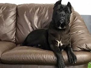 Managing Hayfever in Dogs