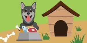 dog raw food diet plan