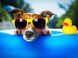 Keeping Your Dog Healthy in the Summer