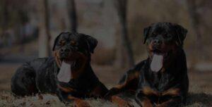 ProDog raw dog food suppliers UK