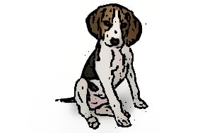 Treeing Walker Coonhound feeding guide