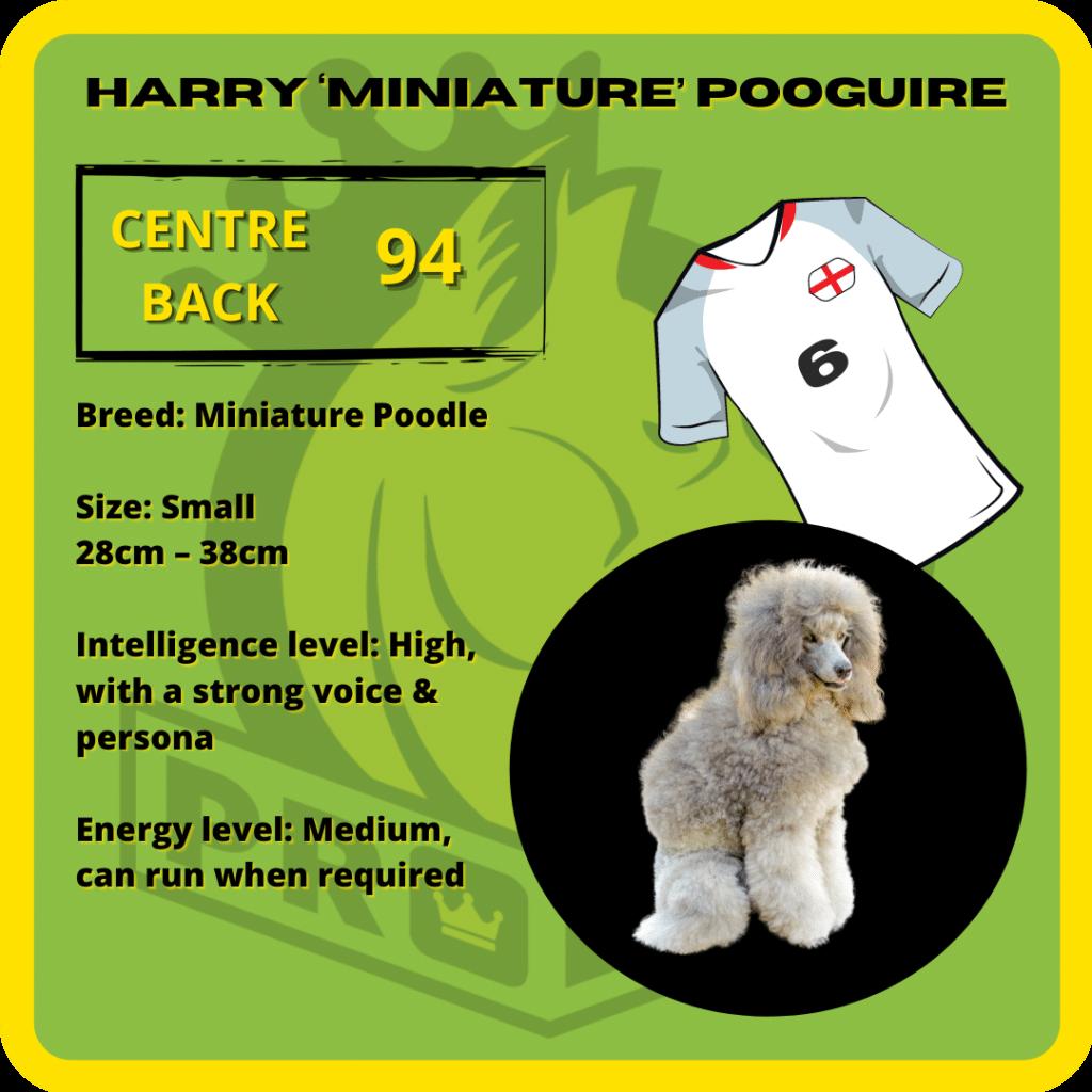 Harry Miniature Pooguire