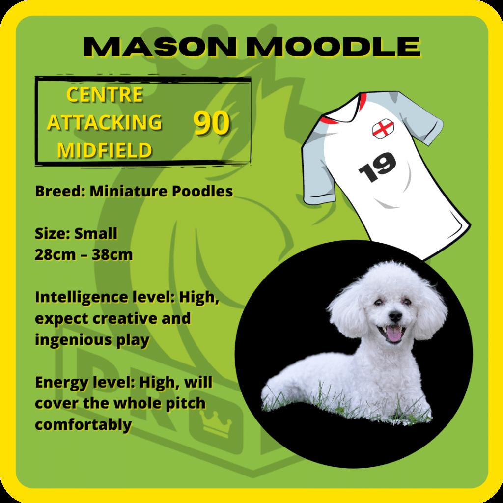 Mason Moodle