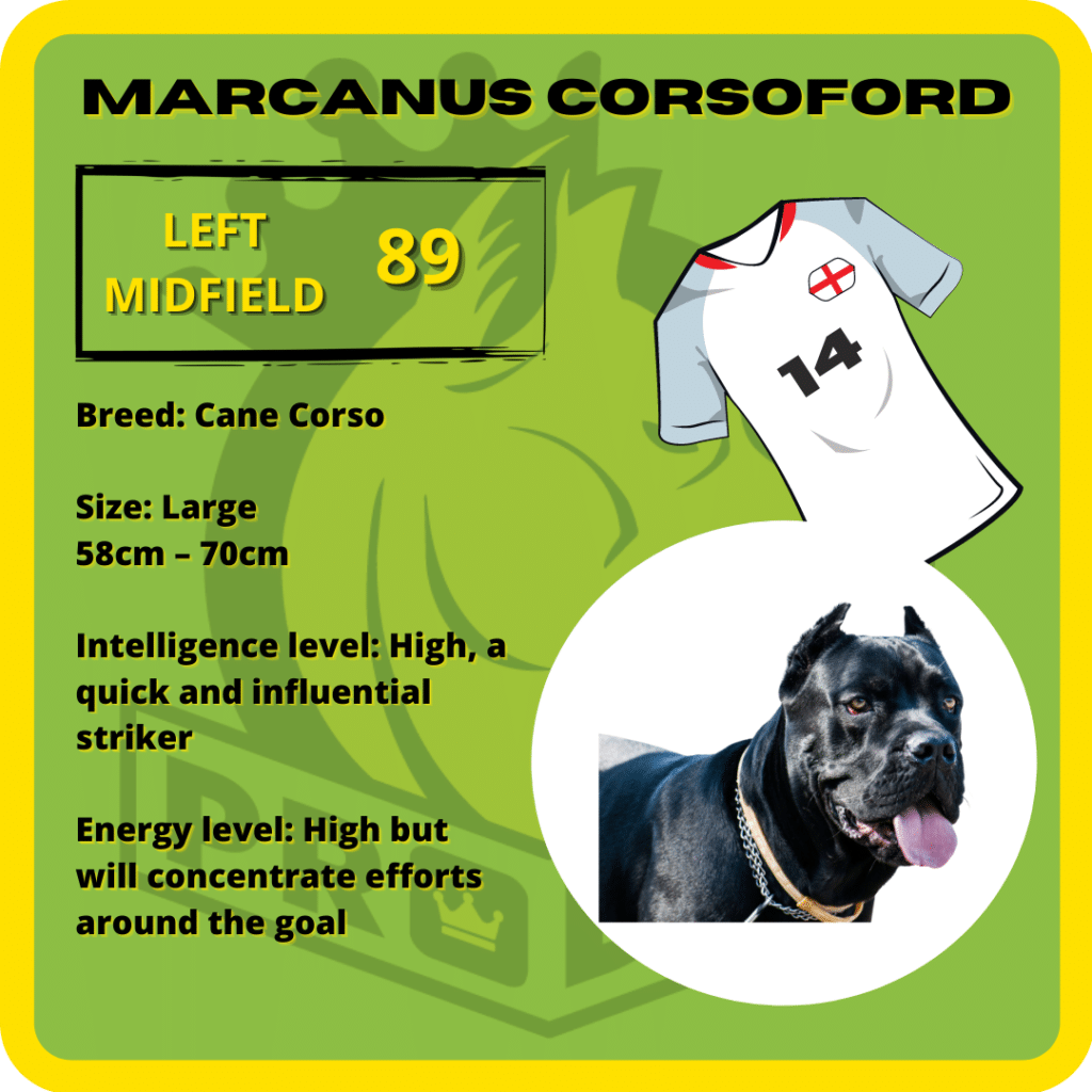 Marcanus Corsoford